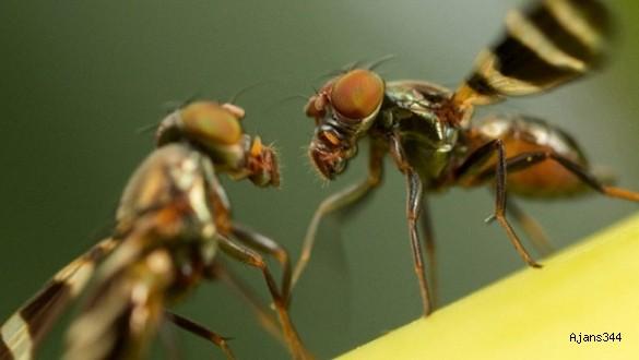 140 milyon yıllık genlerle üretilen mutant böcek