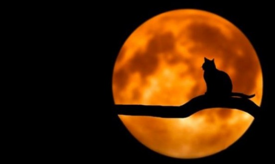 21.Yüzyılın En Kanlı Ay Tutulması Gerçekleşti