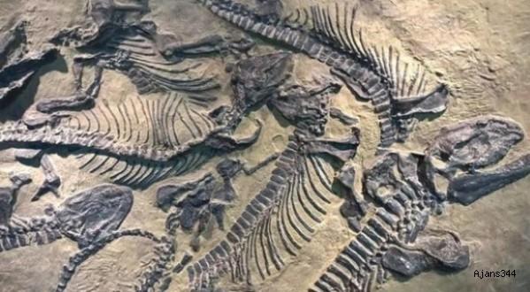 Arjantin'de Dinozor Fosili Bulundu