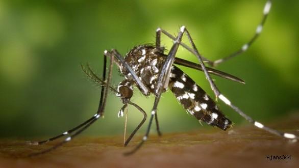 DNA'sını Hacklediği Sivrisineklerin Kökünü Kuruttu