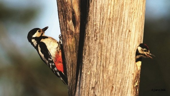 Türkiye Üreyen Kuş Atlası yayımlandı