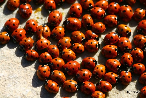Uğur böcekleri bilime ilham kaynağı oluyor
